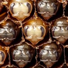 abelha-timelapse