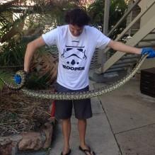 150917110209-snake-in-loo-5-exlarge-169